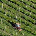 S traktorem uprostřed vinohradu.