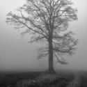 (ne)obyčejný strom