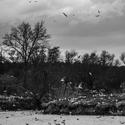 Ptačí ostrov, Šenov