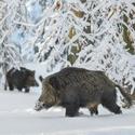 letošní zima v přírodě (9)