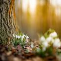 Konečně jaro!