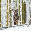 letošní zima v přírodě (29)