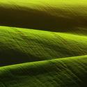 Pole zeleně