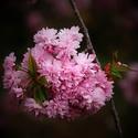 Jarní síla
