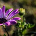 Květina s duší.......