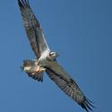 Báječný pták s kaprem