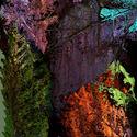 Podzimni abstrakce