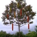 Salámovník uzenkonosný (Salamosa salamifera Qas.)
