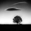 Pod oblakom strom