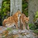 obrázky z Bavorského lesa (3)