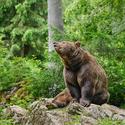 obrázky z Bavorského lesa (5)