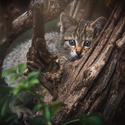Kočka divoká mládě