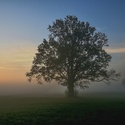 Mlhavé Poodří