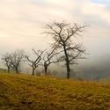 Ráno s mlhou