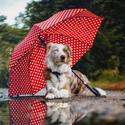 Pod deštníkem je fajn