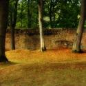 Zvíkovské stromy