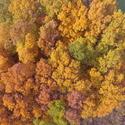 Mořské korály nebo les?