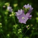 Odpolední květinky