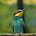 Zástupce ptačí říše