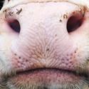 Portrét z farmy