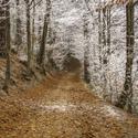 """""""Zlatá cesta"""" v zimě."""