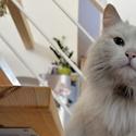náš kočičák po druhé