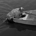 ryby v přesile