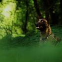 Lesní malina