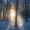 Duch jeleňa