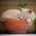 Kočka v květináči
