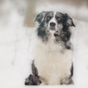 sníh..snížek