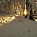 Kysucký les