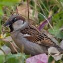 Lepší vrabec v trávě než holub na střeše