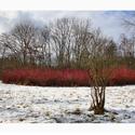 ...zima u Ondřejova...