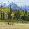 obrázky z přírody Severní Ameriky (3)