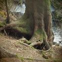 Kořeny jednoho stromu třikrát jinak III.