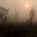 Ráno v Chitwanu