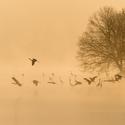 mlhavé ráno nad rybníkem Rožmberk