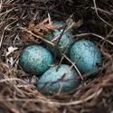 Dračí vejce