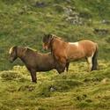 obrázky z islandské přírody (47)