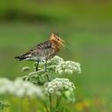 obrázky z islandské přírody (49)