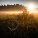 Šumava - Pavučina v ranním světle