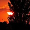 ptačí let do večerního slunce západu