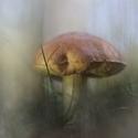 Kouzelná houba