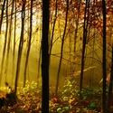 Když se les probouzí