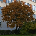 Podzim na Pražačce