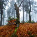 Lesní směrovka