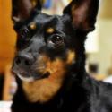 Můj psí přítel