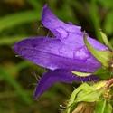 Květy II