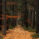 V lese II